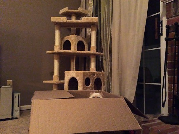 logica-gatos-divertida-3-10