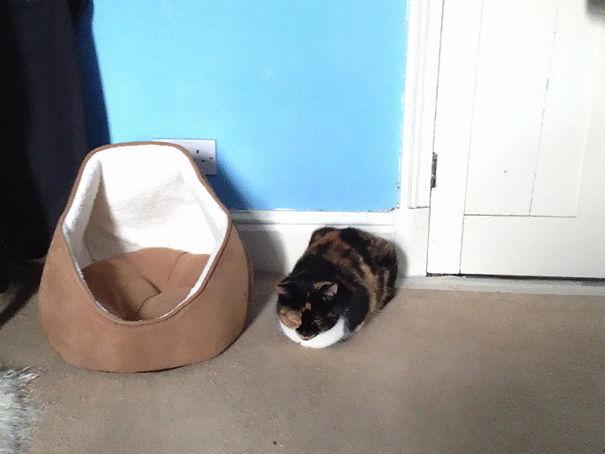 logica-gatos-divertida-3-11
