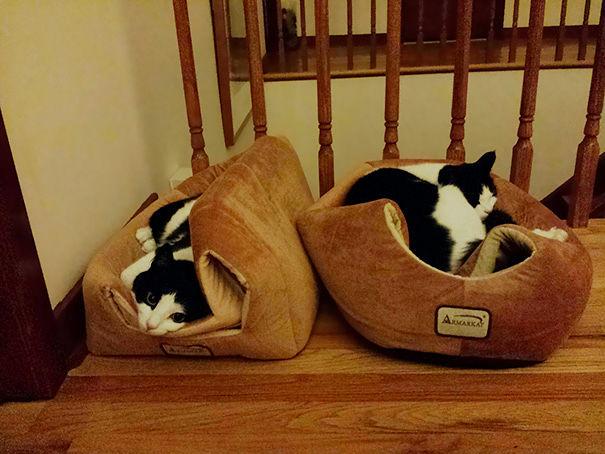 logica-gatos-divertida-3-13
