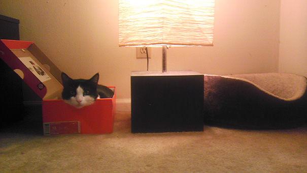 logica-gatos-divertida-3-17