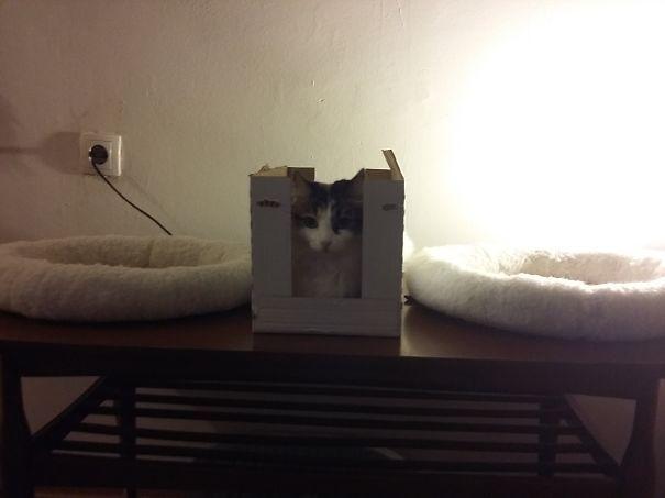 logica-gatos-divertida-3-18
