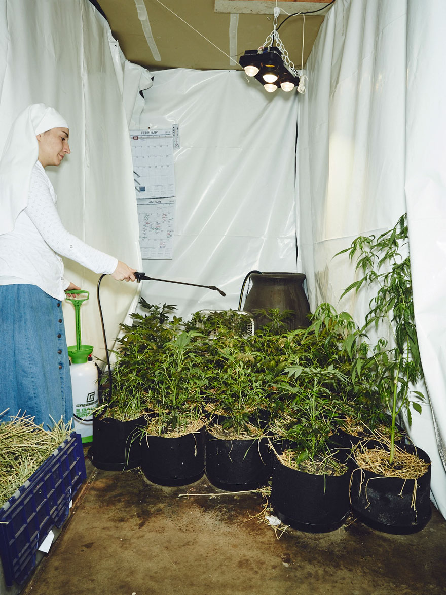 monjas-hermanas-valle-cultivo-marihuana-medicinal-3