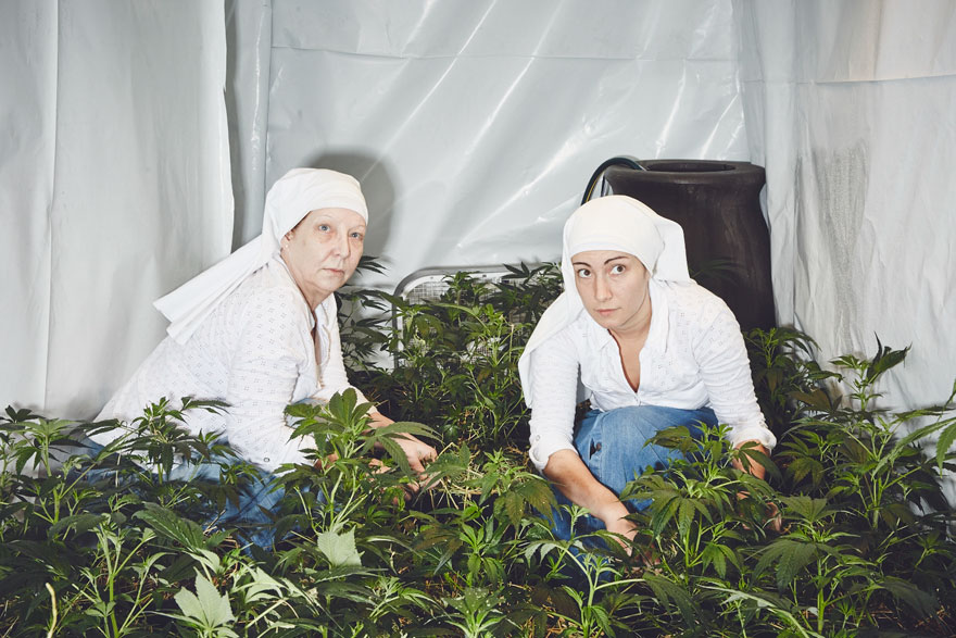 monjas-hermanas-valle-cultivo-marihuana-medicinal-4