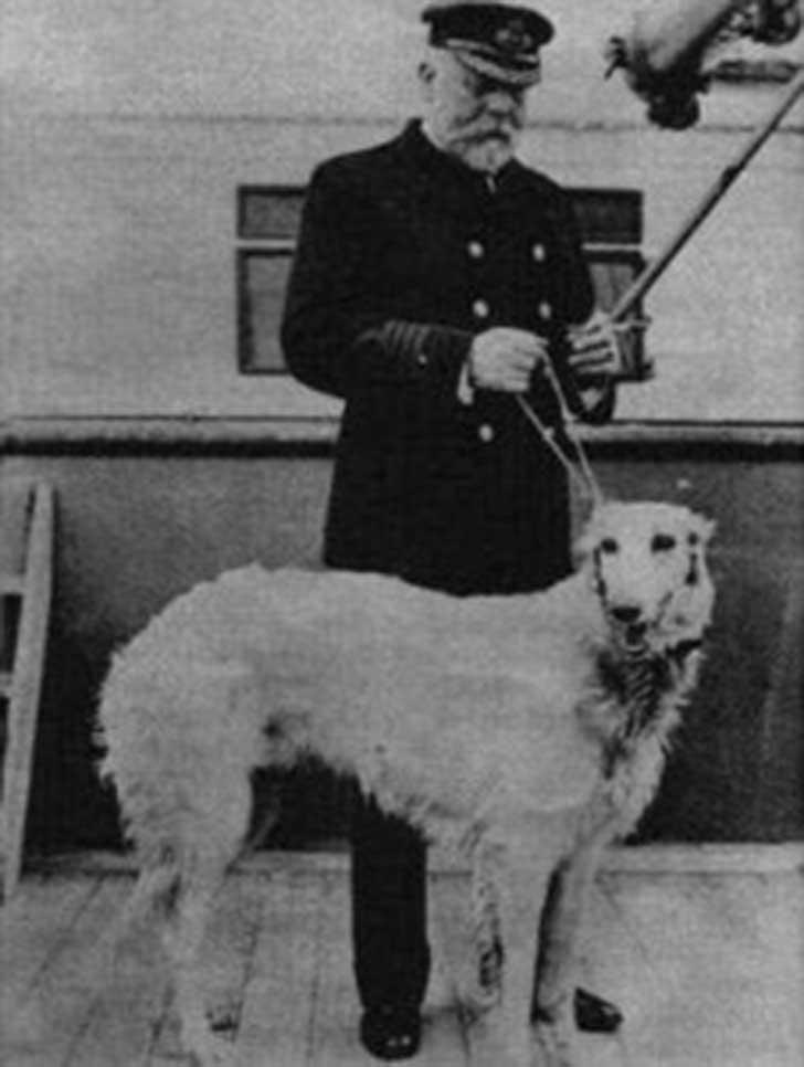perros-titanic-2