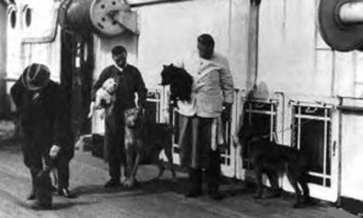 perros-titanic-3
