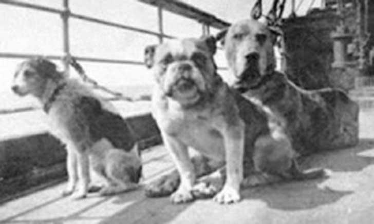 perros-titanic