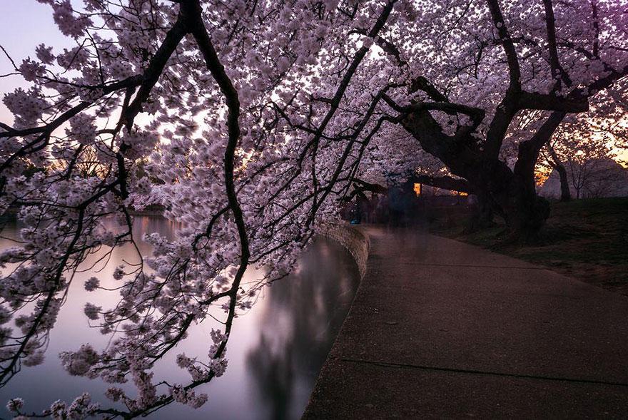 primavera-flores-cerezo-sakura-japon-national-geographic-12