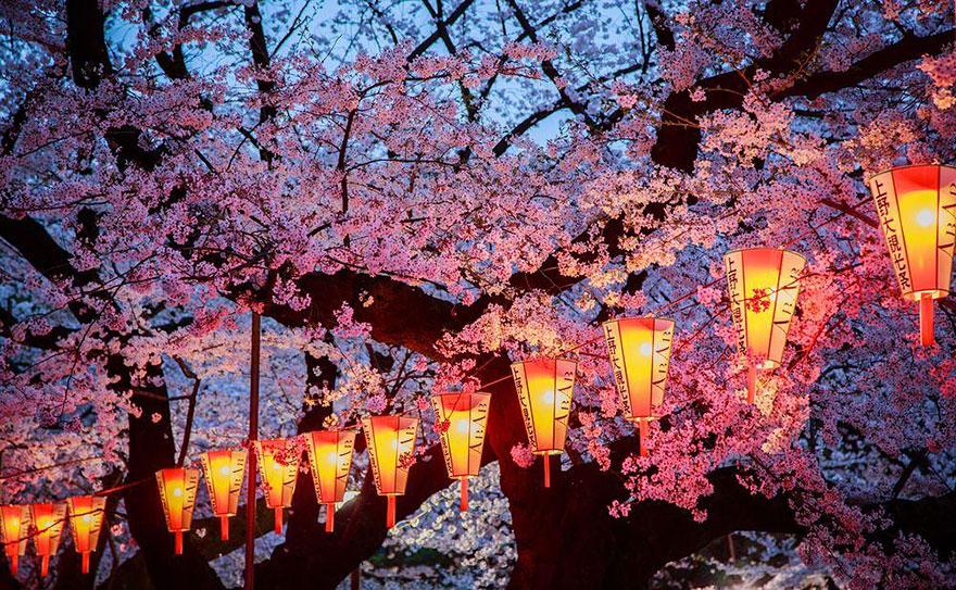 primavera-flores-cerezo-sakura-japon-national-geographic-13