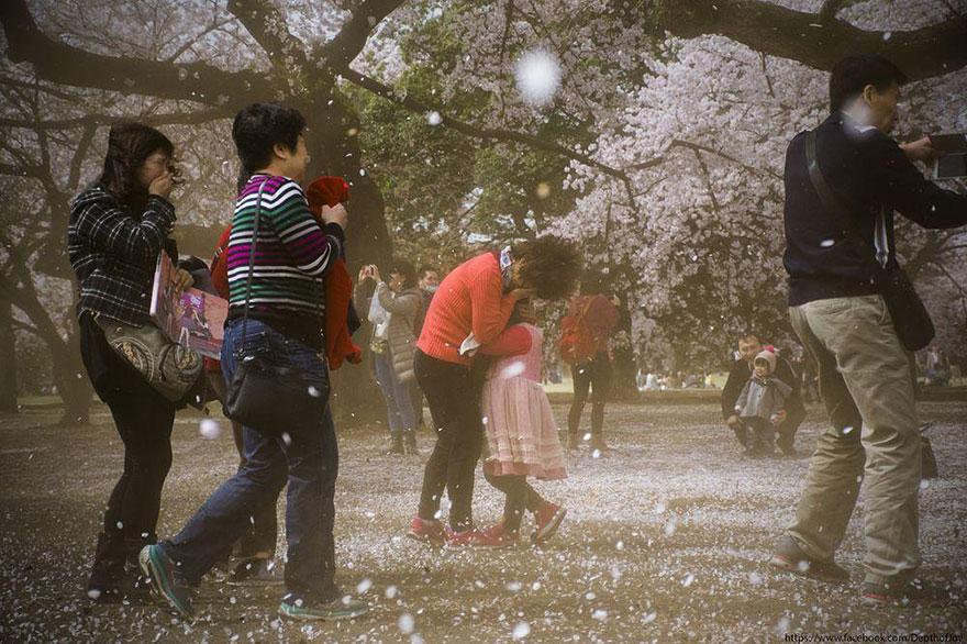 primavera-flores-cerezo-sakura-japon-national-geographic-8
