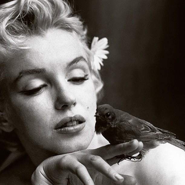 6-cosas-terribles-y-trágicas-que-no-sabías-de-Marilyn-Monroe-4