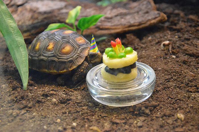 Resultado de imagen para tortuga cumpleaños