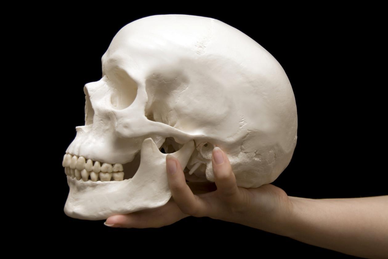 Cuantos-huesos-tiene-el-craneo