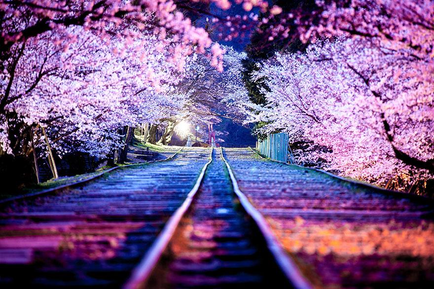 15 razones por las que deberías visitar Japón!