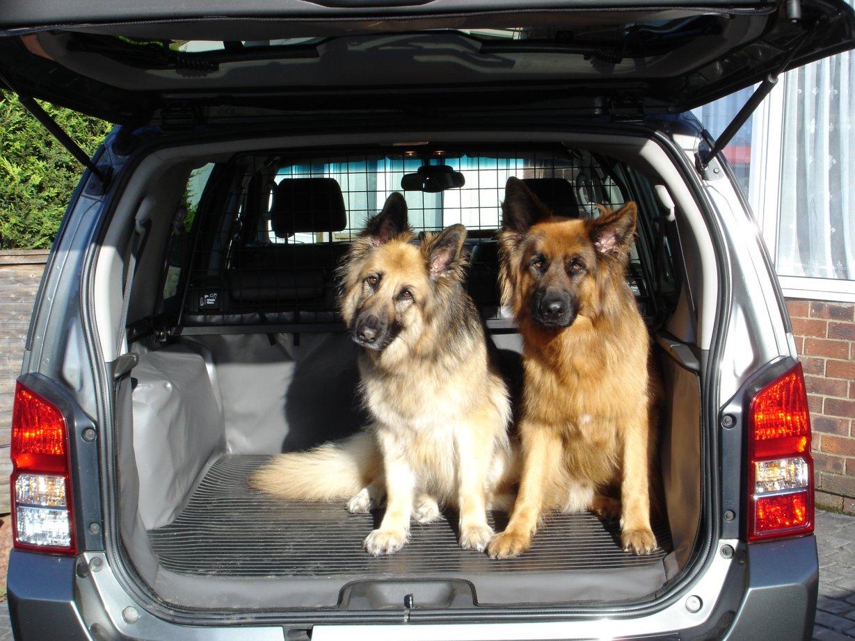 viajar-con-mascotas-3