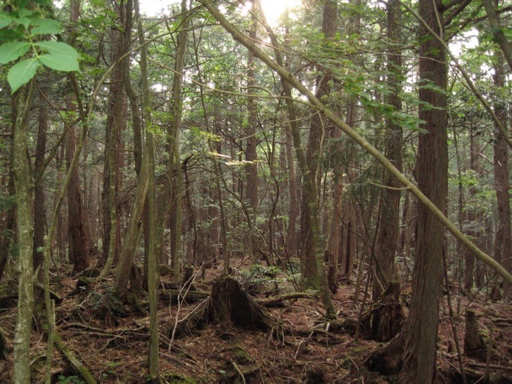 Aokigahara_forest_04