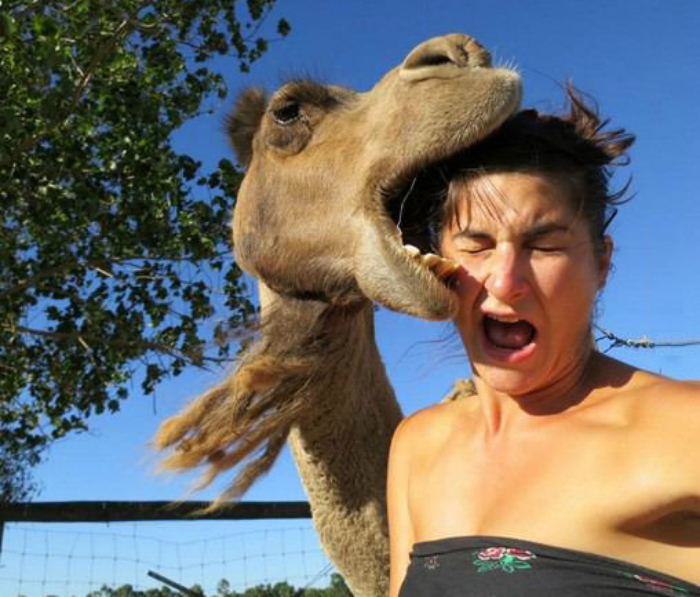 Camel-Biting-Girl-Head-Funny-Picture