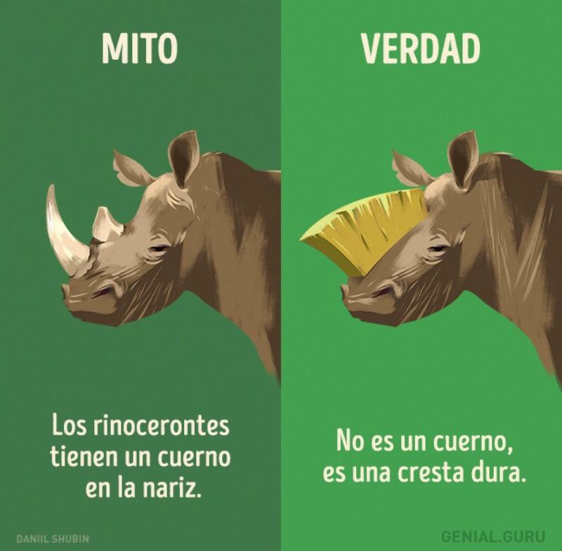 Mitos-sobre-los-animales-10