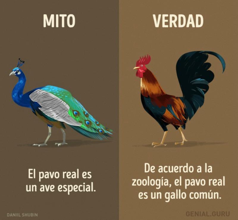 Mitos-sobre-los-animales-12