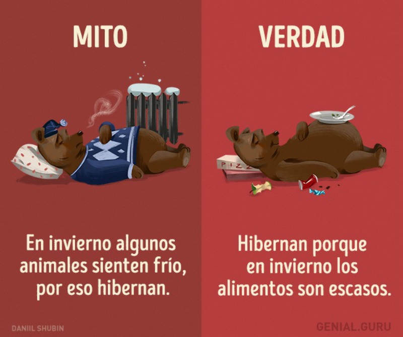 Mitos-sobre-los-animales-13