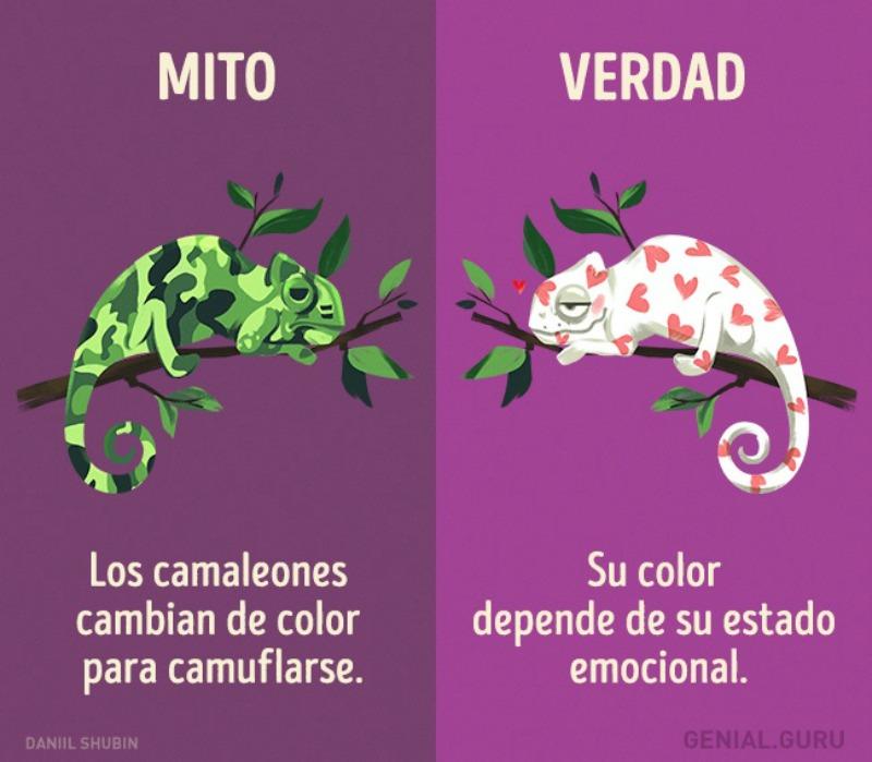 Mitos-sobre-los-animales-5