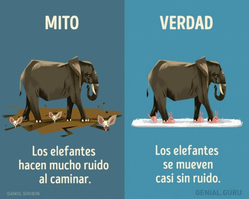 Mitos-sobre-los-animales-6