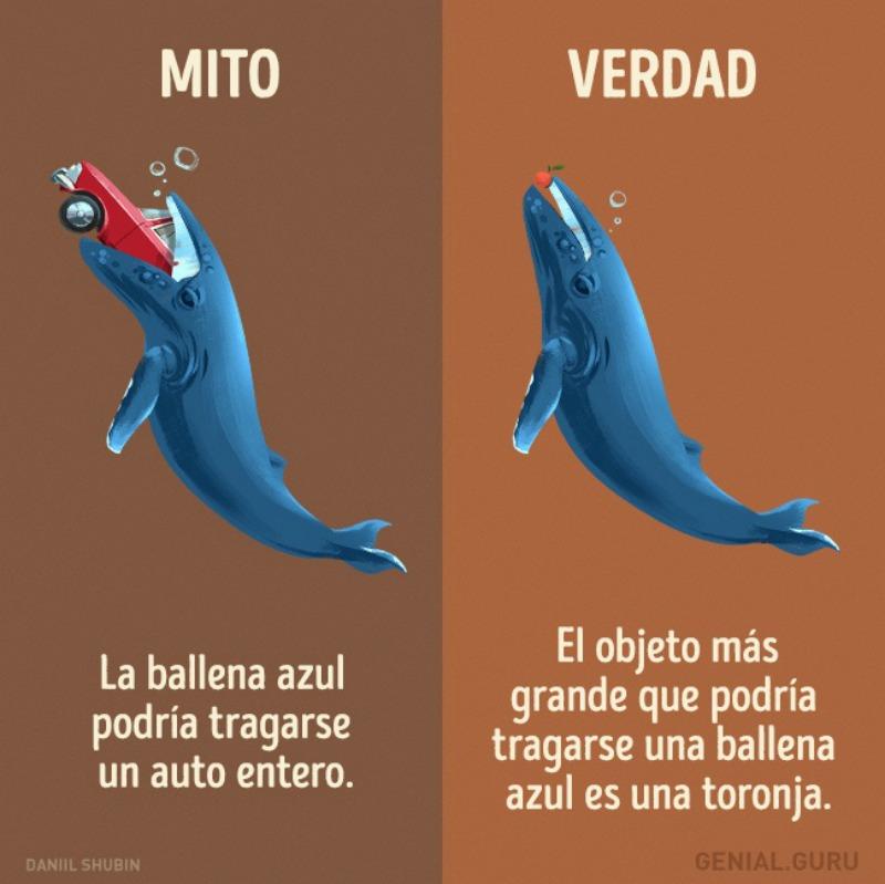 Mitos-sobre-los-animales-7