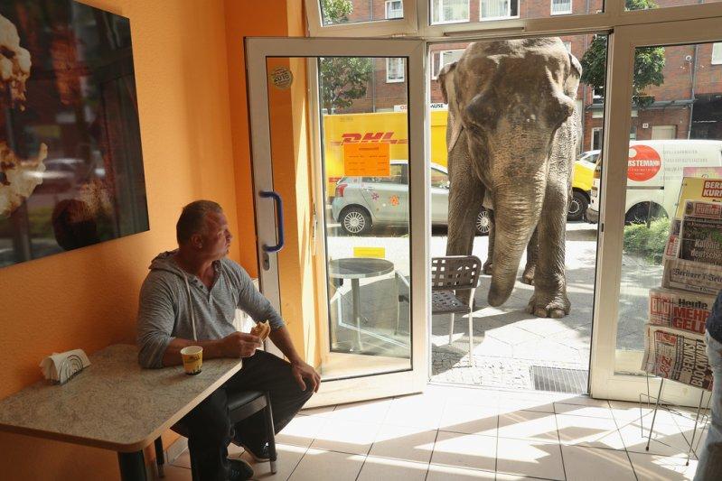 maja-the-elephant-takes-a-walk-v-ytr--vr0ox