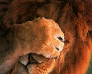 leon-temido