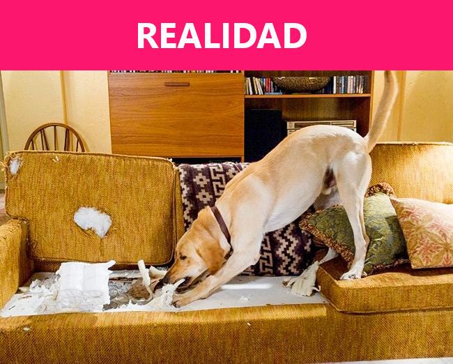 realidad1