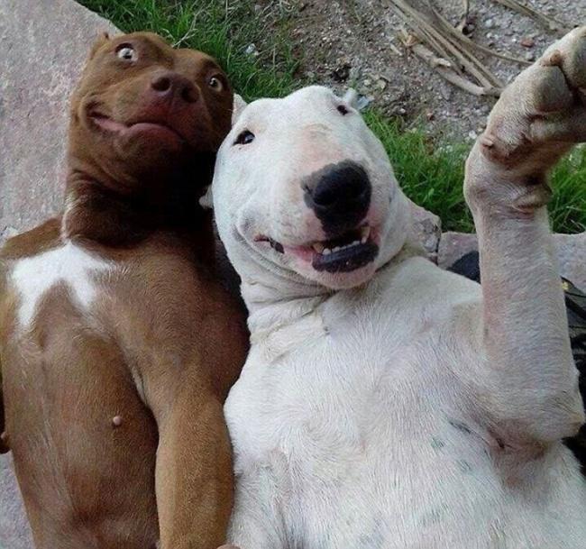 selfies-fabulosas-2016-5