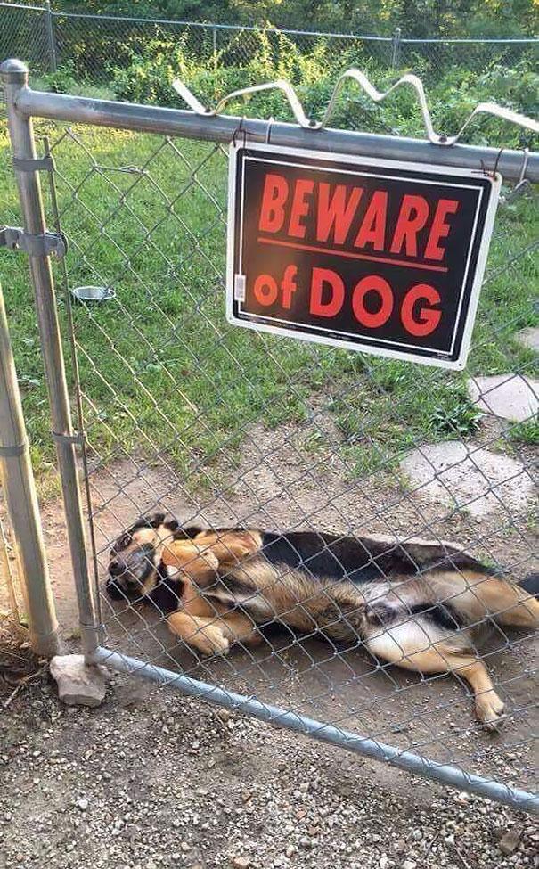 cuidado-con-el-perro-4