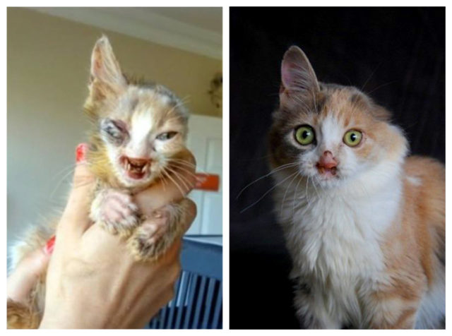 8-before-after-cat-rescue-pictures-640x476