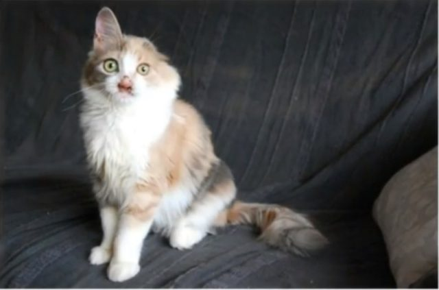 deformed-cat-10-640x423