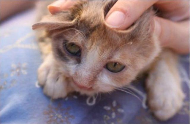 deformed-cat-9-640x418
