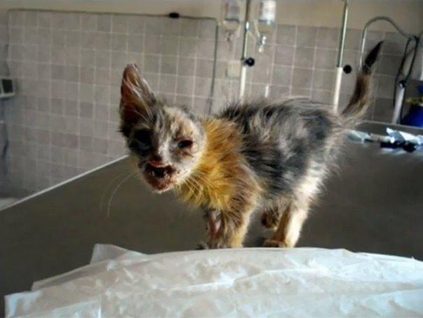 girl-saves-disfigured-cat-istanbul-02