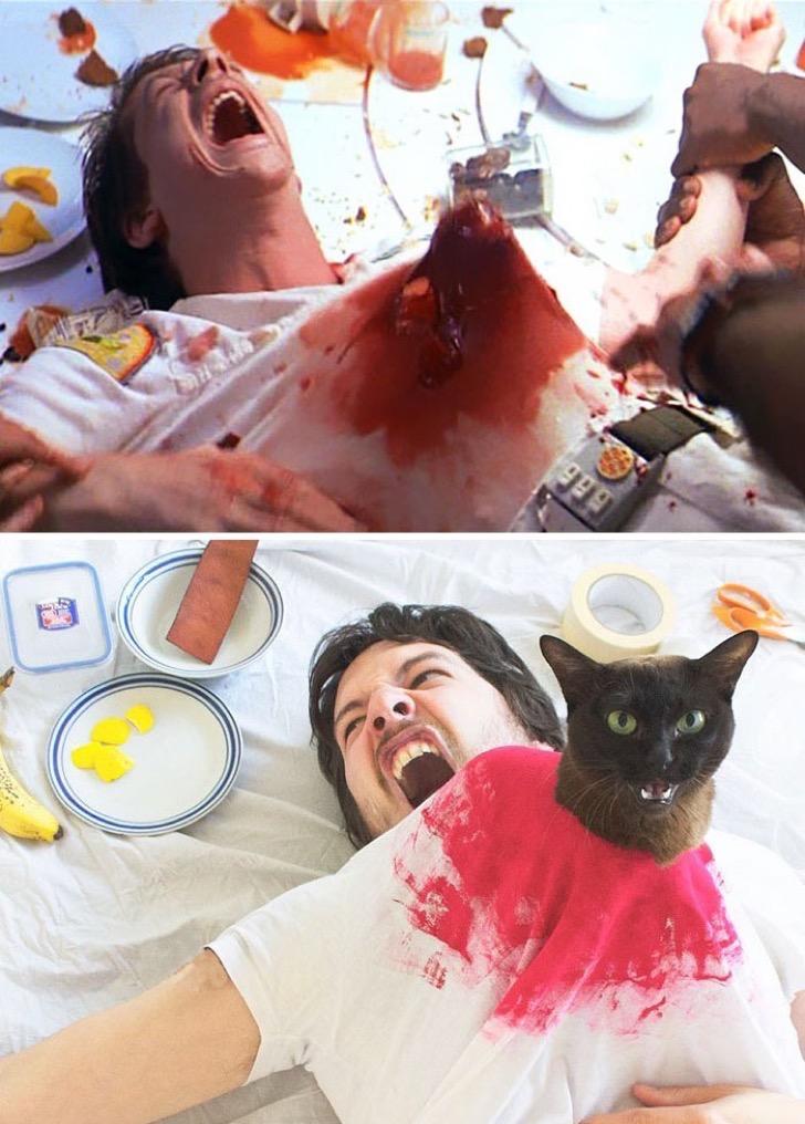 movie-cats-recreate-famous-movie-scenes-1-5833fcdd61693__700-2