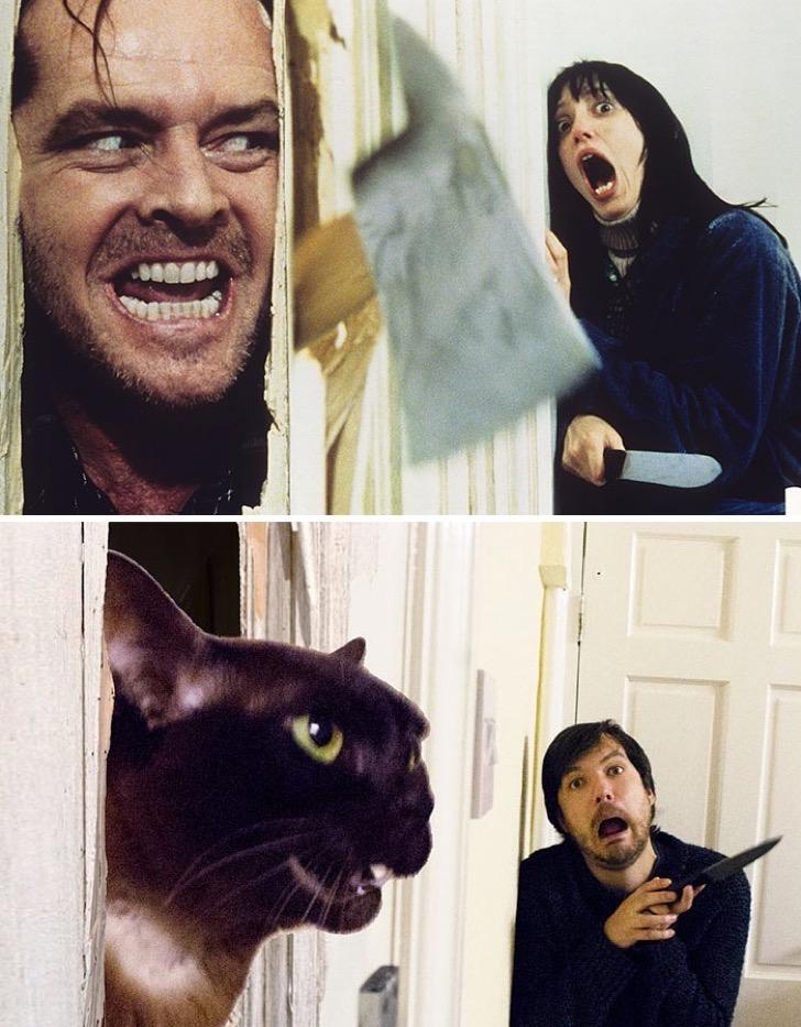 movie-cats-recreate-famous-movie-scenes-2-5833fce07a084__700-2