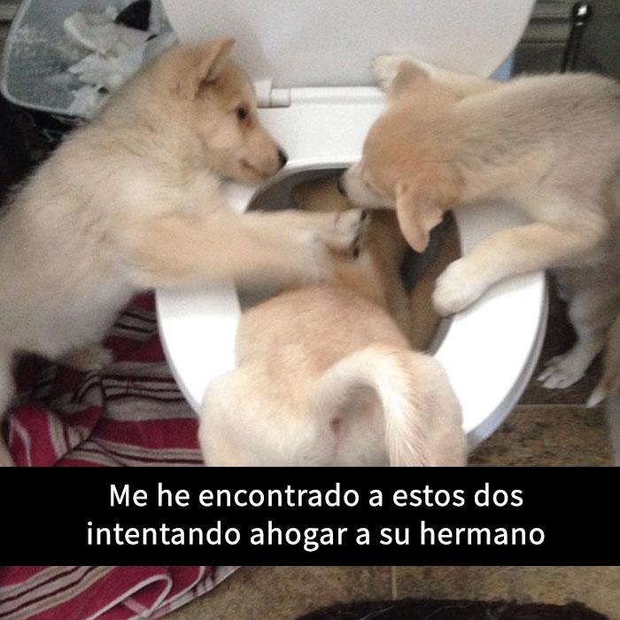 perros-snapchat-2