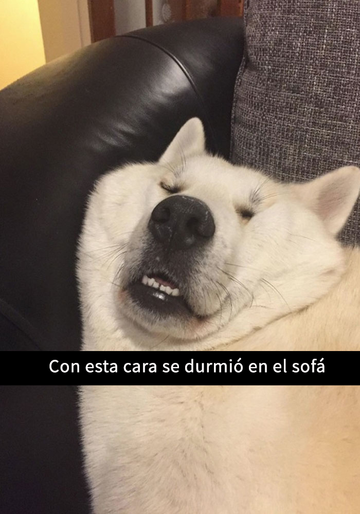 perros-snapchat-6