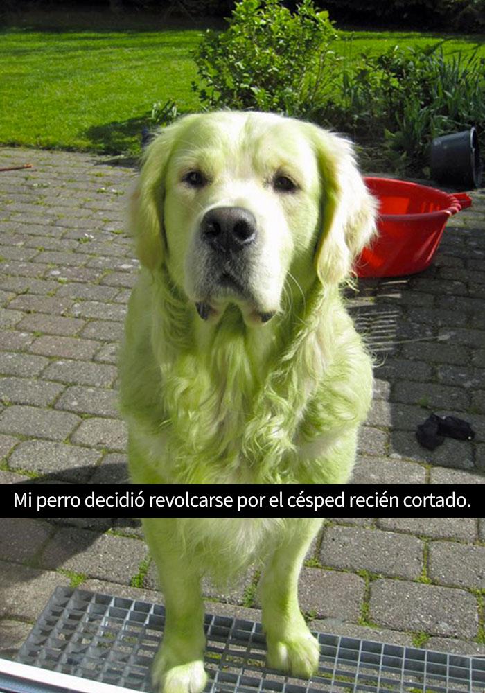 perros-snapchat-8