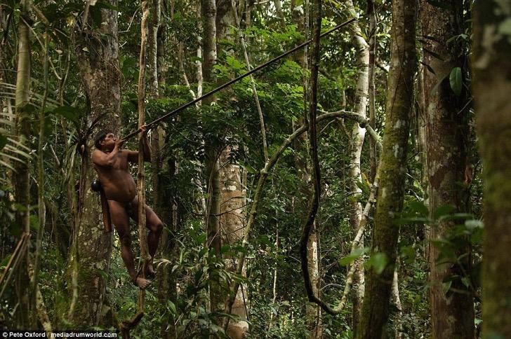 3C44FCF700000578-4135698-A_Huaorani_hunter_shins_up_a_tree_and_shoots_a_blowpipe_dart_at_-a-44_1484822954358