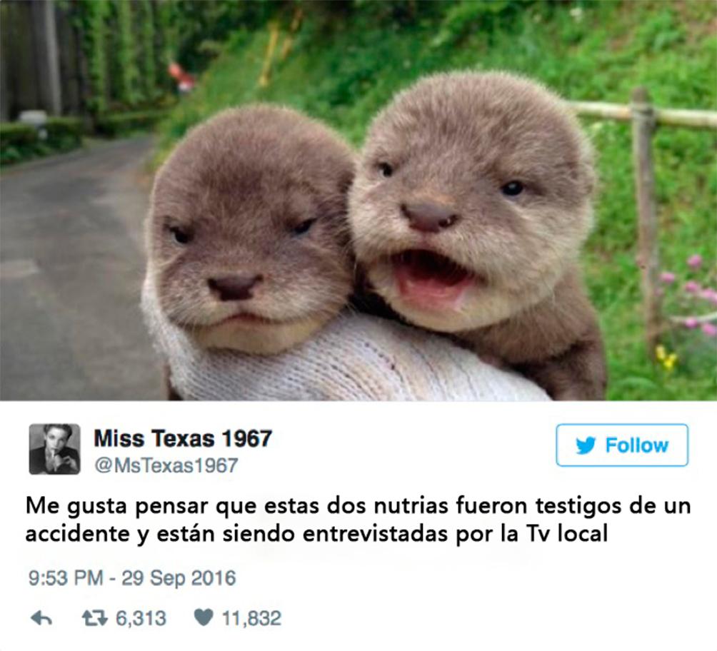 animales-tuits