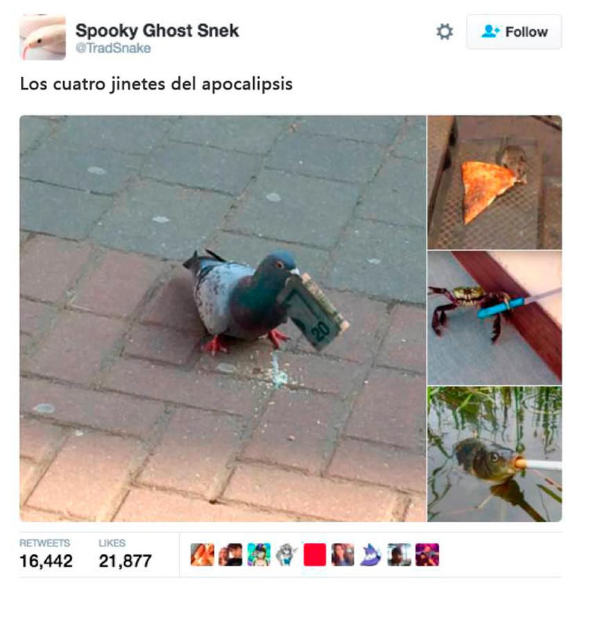 animales-tuits10
