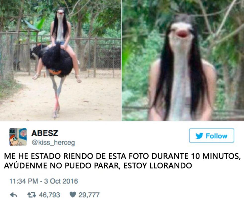 animales-tuits4