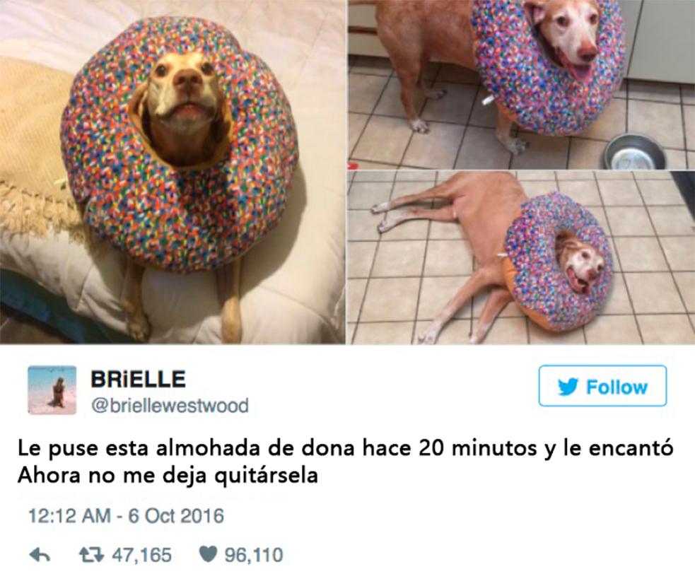 animales-tuits7
