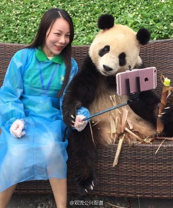 giant-panda-poses-tourist-selfie-2