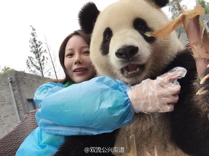 giant-panda-poses-tourist-selfie-3