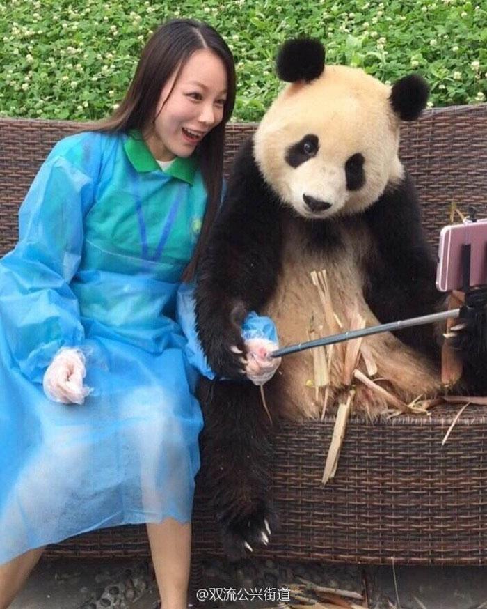 giant-panda-poses-tourist-selfie-4