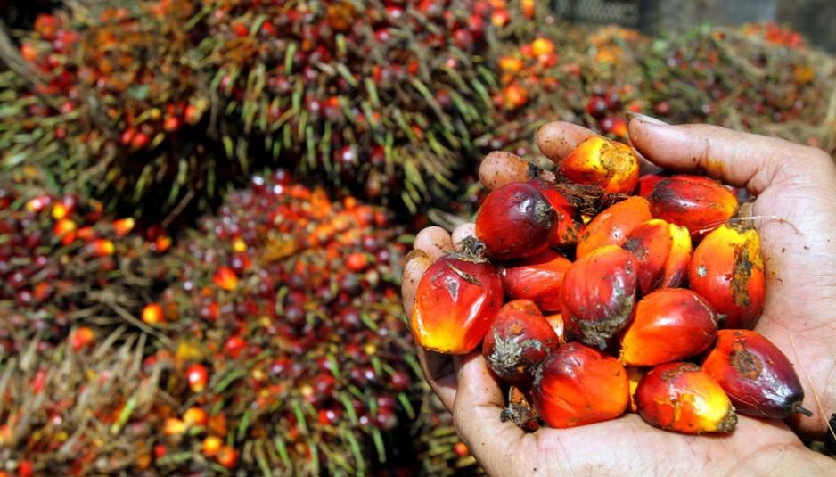 palm-oil-hand-938x535