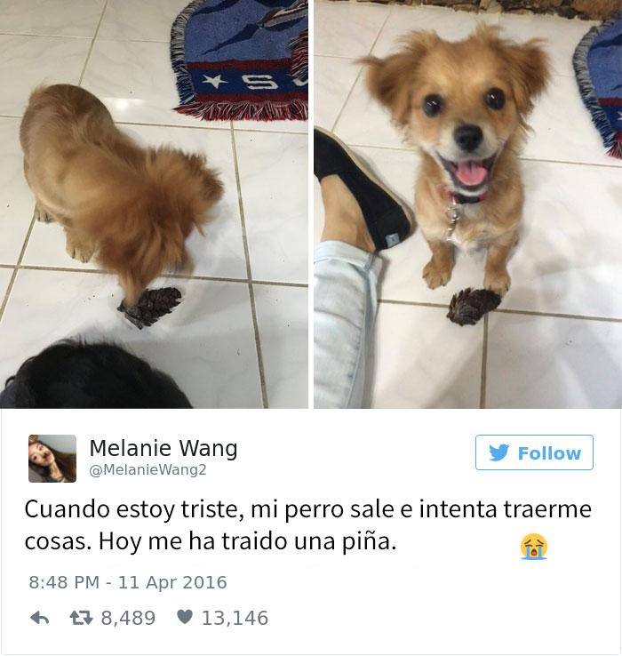 tuits-perros-2016-6